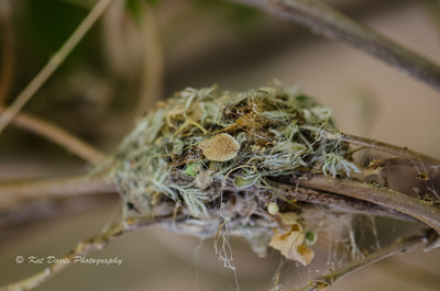 Details of the hummingbird nest.