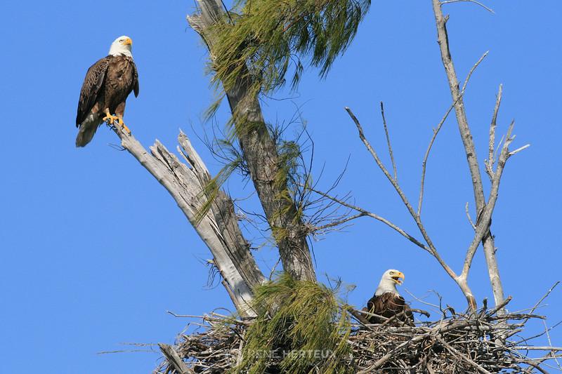 Watchful parents