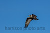 Osprey<br /> Occoquan National Wildlife Refuge, VA