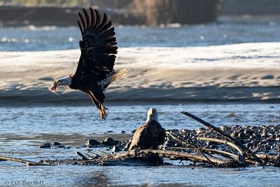 0U2A5728_Eagles