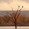 Bosque del Apache NWR, New Mexico