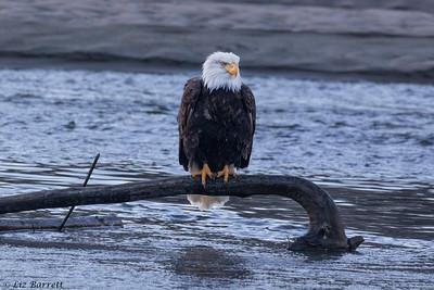 0U2A5213_Eagle