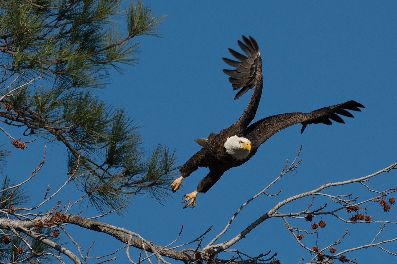 Eagle Launch #3