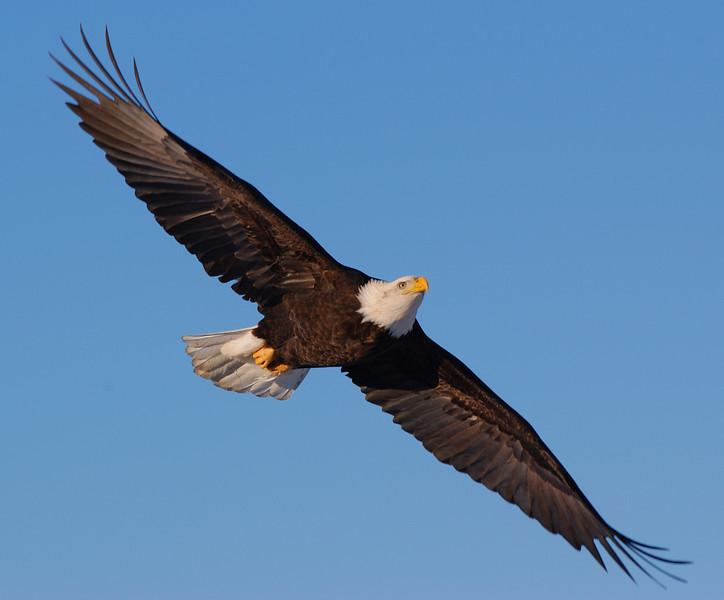aBE-5334: Gliding in