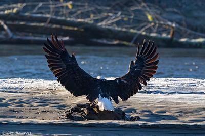 0U2A5545_eagle