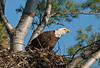 ABE-10084: On nest