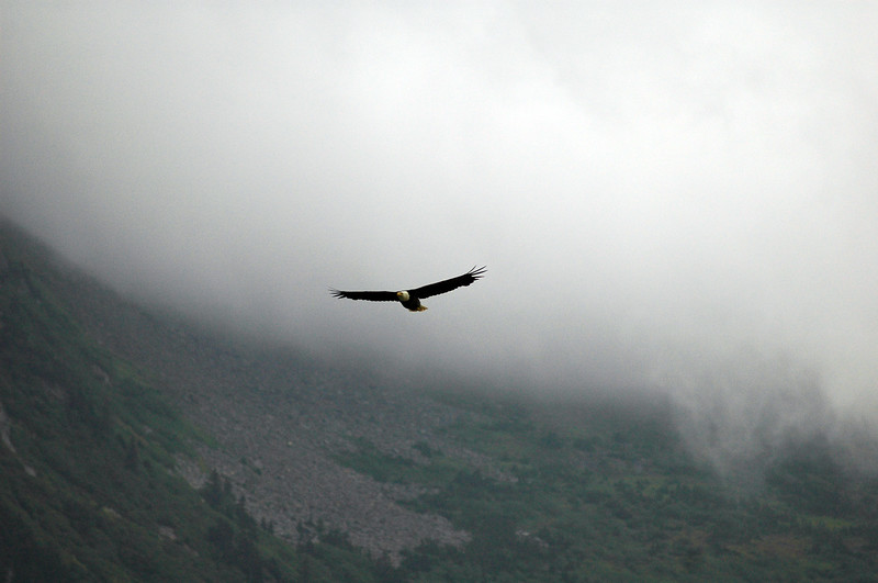 Bald eagle in flight through the clouds<br /> Professional Wildlife Photography by Christina Craft of the Nature Stock Photography Library