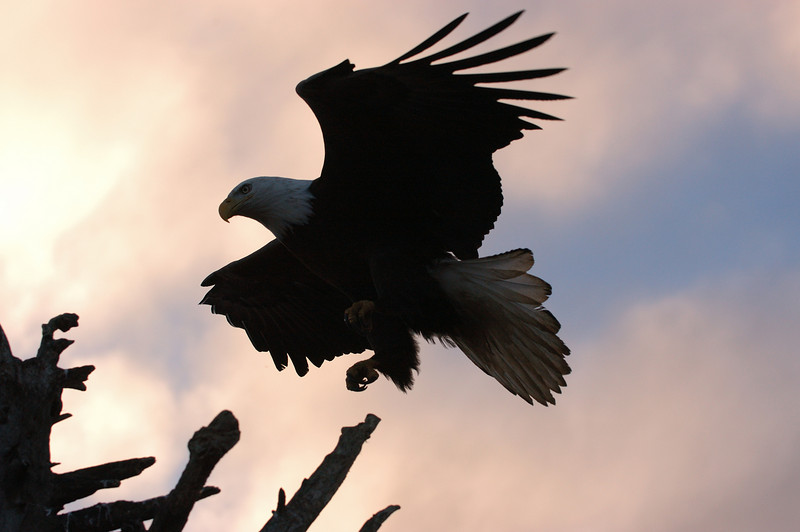 ABE-5055: Landing on perch