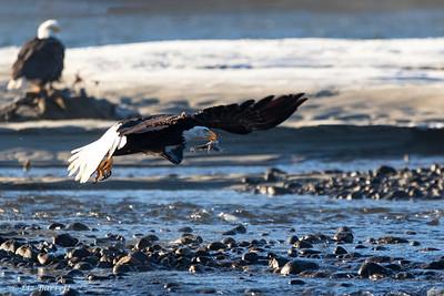 0U2A5654_eagle