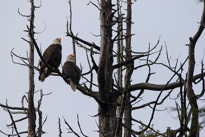 202A0414_Eagles
