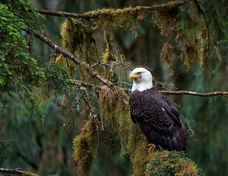 Anan, Alaska