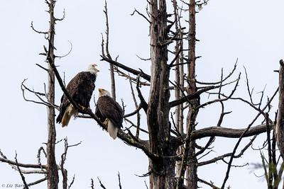 202A0408_Eagles