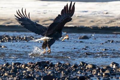 0U2A5661_eagle