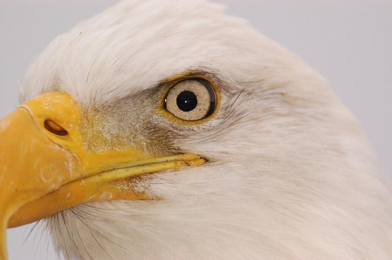 ABE-5689: Eagle eye