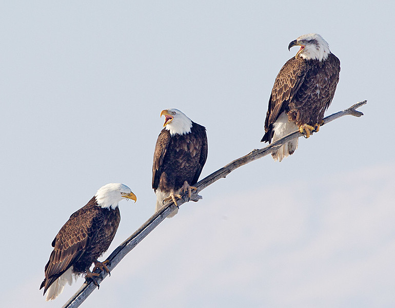 Farmington Bay Reserve, Utah