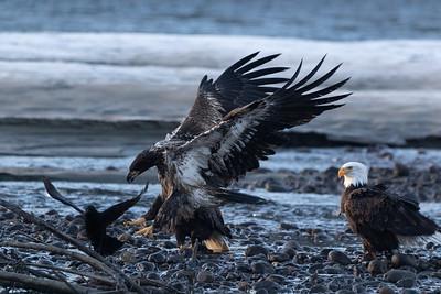 0U2A5355_Eagle