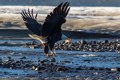0U2A5656_eagle