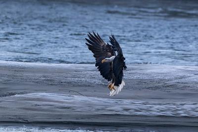 0U2A5086_Eagle