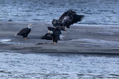 0U2A5094_eagle