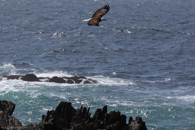0U2A3347_Eagle