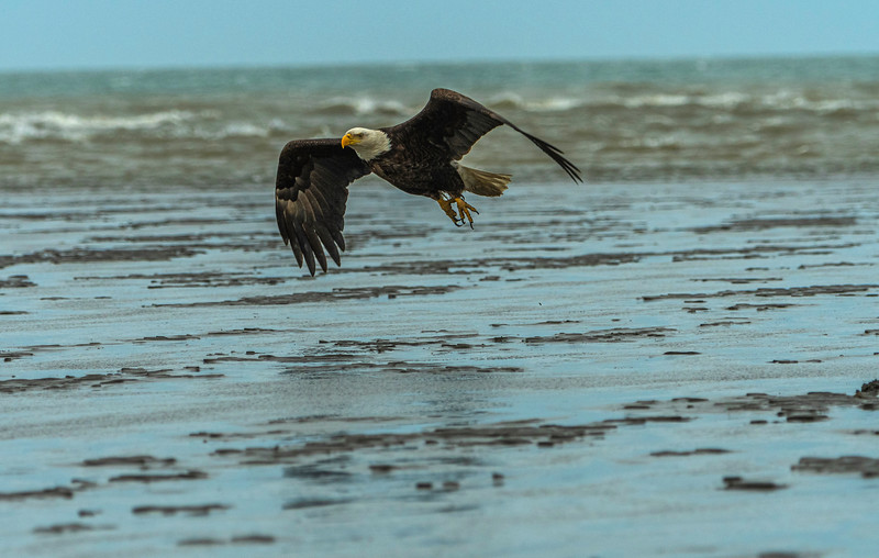 Flying at low tide