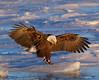 ABE-5446: Eagle landing