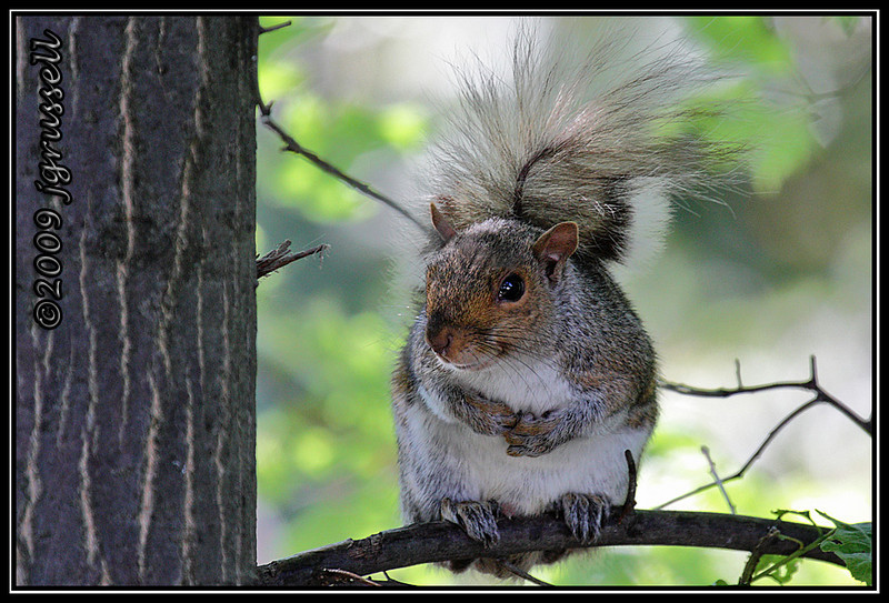 """""""Who, me? Raid your bird feeders?<br /> Not me. I would NEVER do such a thing..."""""""