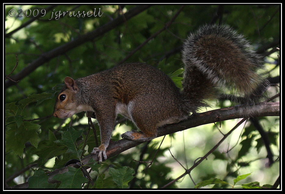 """""""I wonder if there are any acorns yet..."""""""