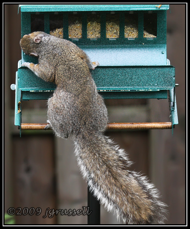 Squirrel-proof feeder?