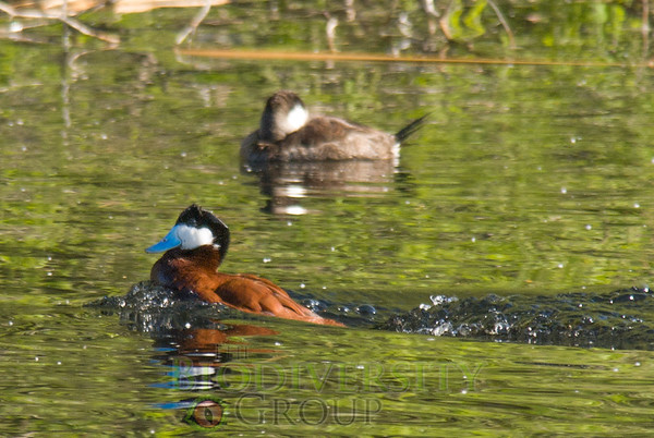 Biodiversity Group, _DSC6068