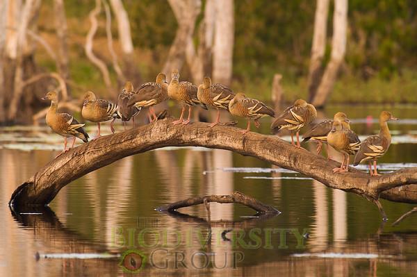 Biodiversity Group, PICT0621