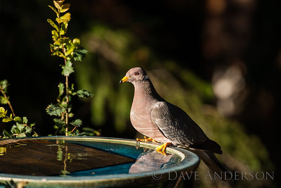 Visitors at our bird bath