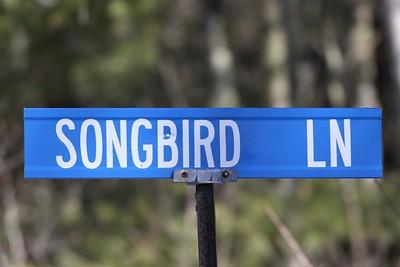Bird Street Signs