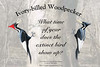 Ivory-billed Woodpecker, humor poster. The comment quotes the question asked of a docent by a visitor at a bird refuge.
