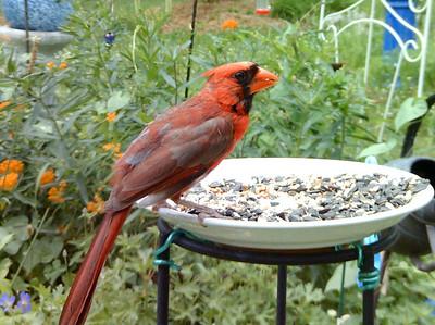 BirdCam Photos