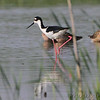 2012-04-14 RMBS CBCA :     Riverlands Migratory Bird Sanctuary  Columbia Bottom Conservation Area       Jump to >>  Dec 2011 • Jan 2012 • Feb • Mar • Apr  May • Jun • Jul • Aug • Sept •  Oct •  Nov •  Dec •  Jan 2013       Click on main photo below for larger version