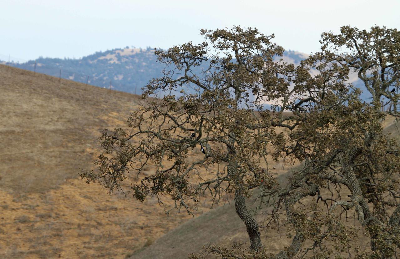 Ballard Canyon Road, Santa Ynez Valley