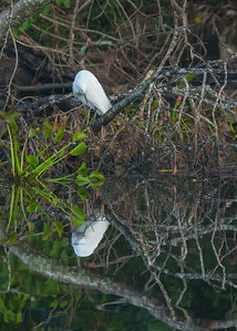 that's me!! a Snowy Egret at Couturie Forest, New Orleans, LA