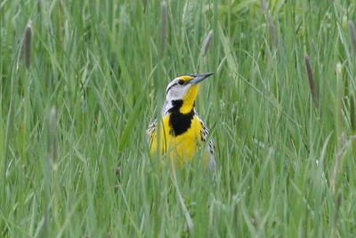 Augusta Bird Club Birds