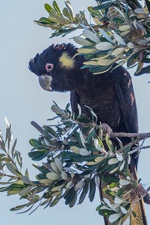 Birdlife Gold Coast Field Trips