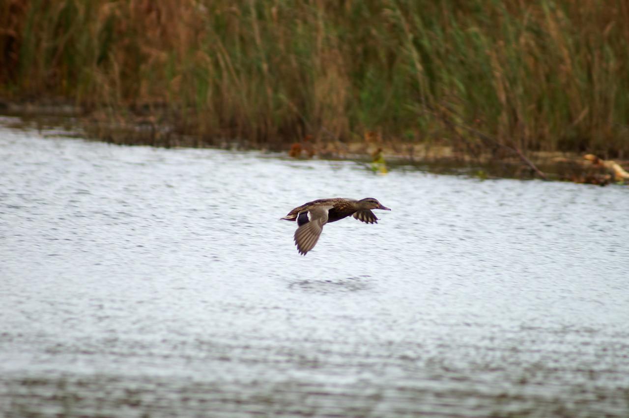 10-19-2012 Deer Island and Parker River 243 SM Edit