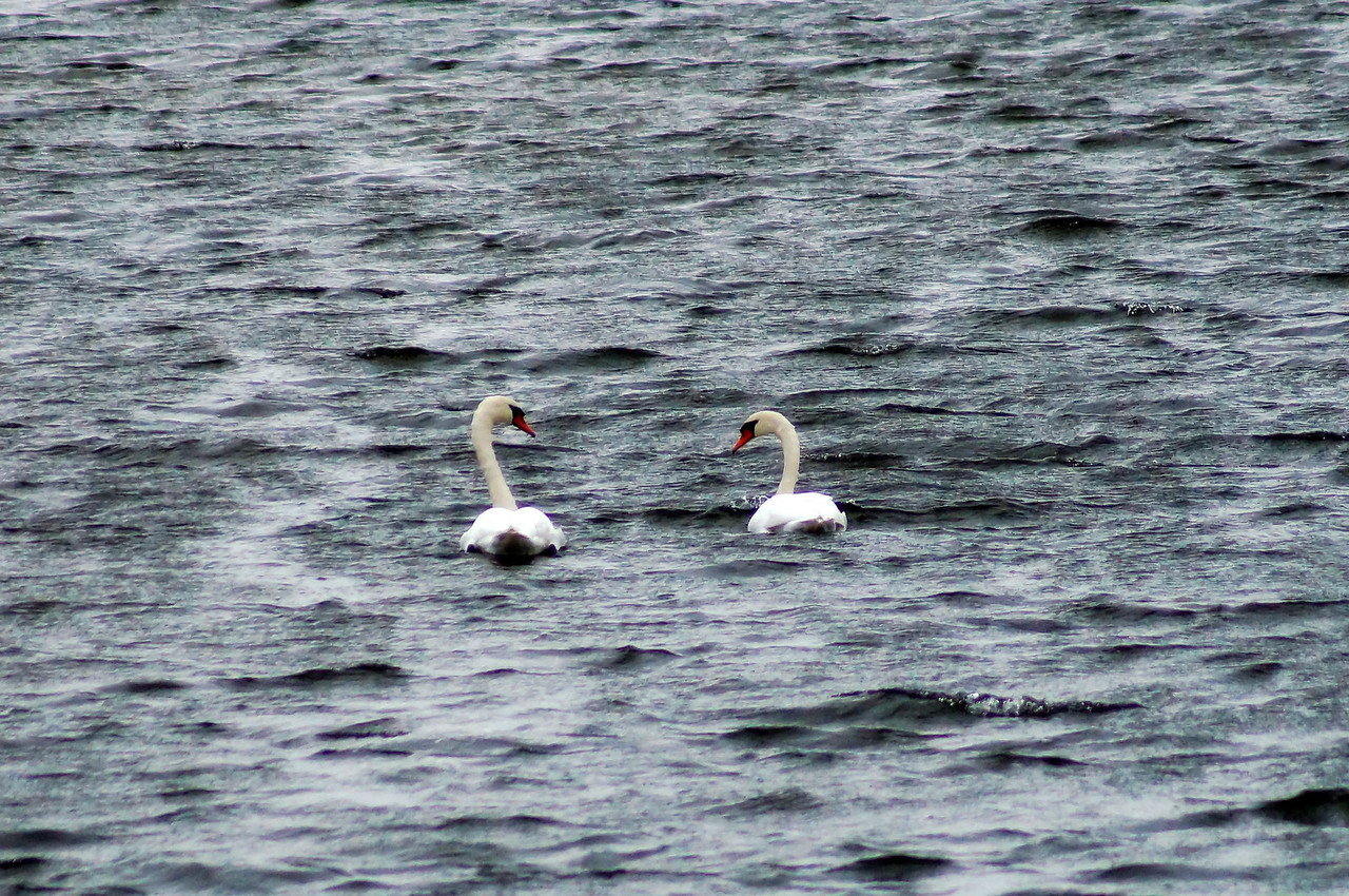 10-19-2012 Deer Island and Parker River 188 SM Edit