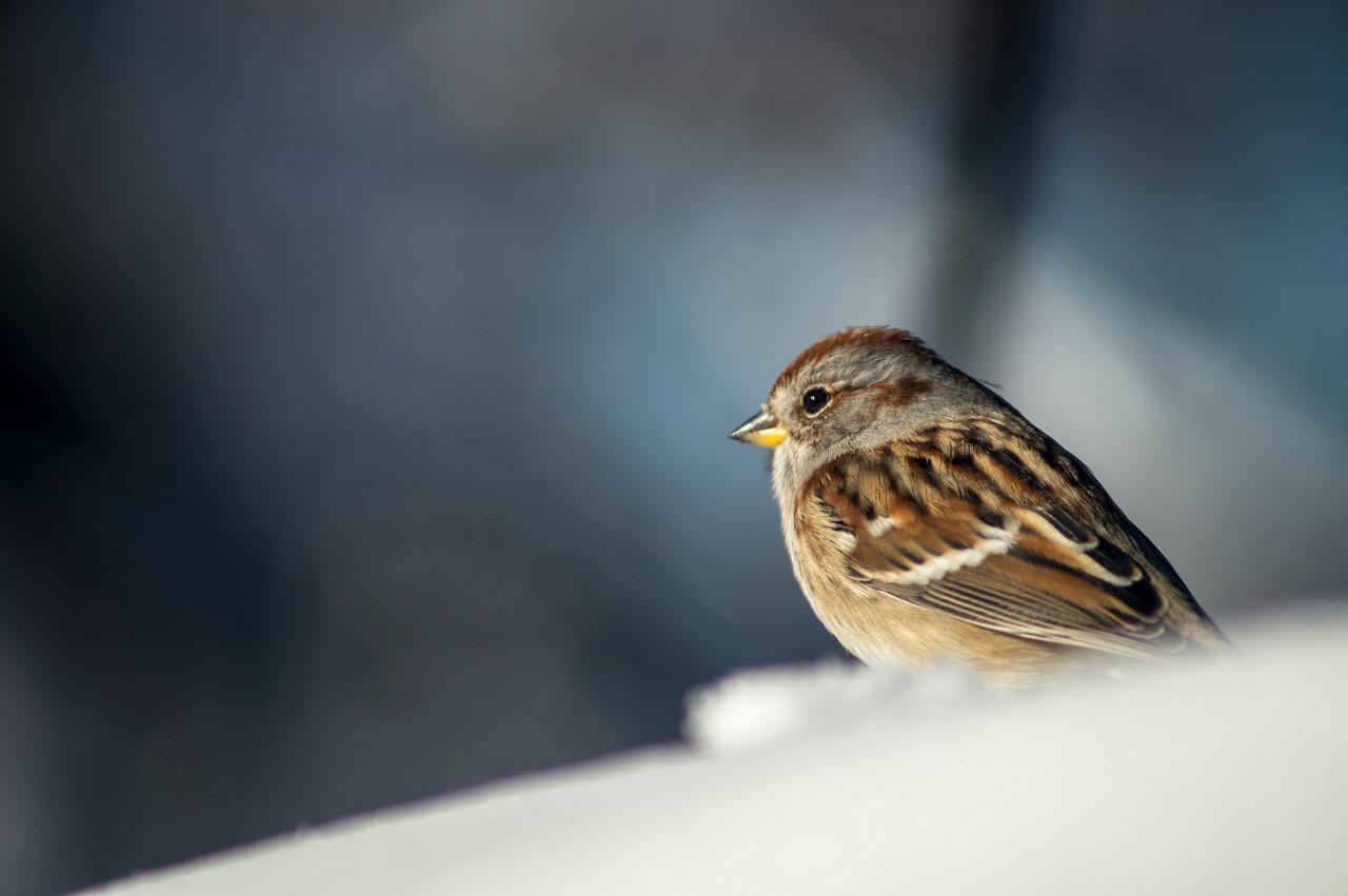 Finch SM