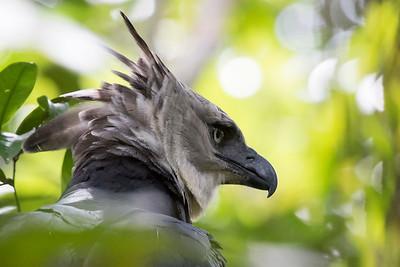 Birds - Brazil