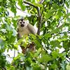 Squirrel Monkey 2R5A9709p