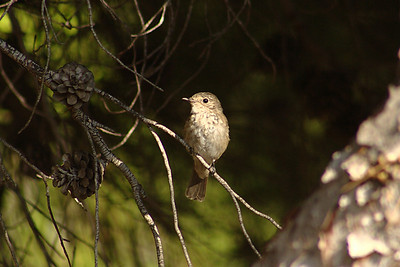Birds Spain