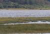 Geese coming to land on a sandbar at Moosonee.