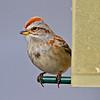 2010 April 25th: Sparrow