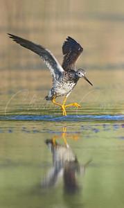 Yellow Legs Jump