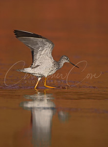 Yellow legs in Pink